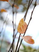 Mid-Autumn. by asaluiphotography