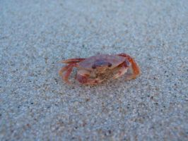 crab 3 by simbion-stock