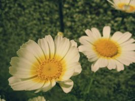 SimpleFlowers by ModestMan349