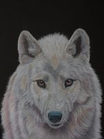 White in coloured pencils by Sarahharas07