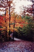 Forest of Autumn_year 2000 by Hiox