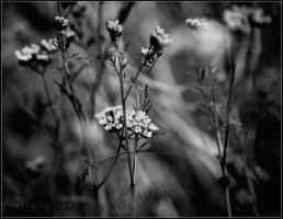 black flowers by ArtOriginal