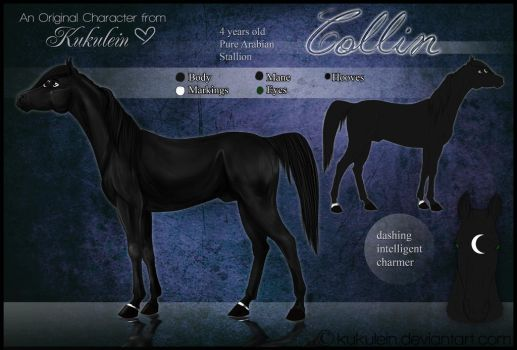 Collin - Reference Sheet by Kukulein