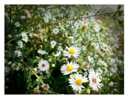 White Flowers by Alley9