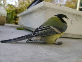 Tit 5 by Panopticon-Stock
