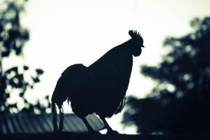 Rooster at Sunrise by At0micDrag0n