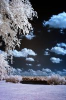 Lake Crabtree IR XXV by LDFranklin