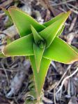 Catus Star by my-dog-corky