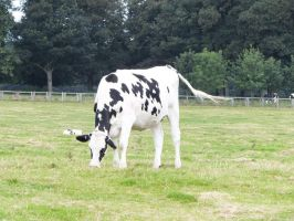 YSP Yorkshire Sculpture Park - Cow :'3 by Bethasaur
