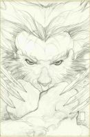 WOLVERINE 55 cover pencils by simonebianchi