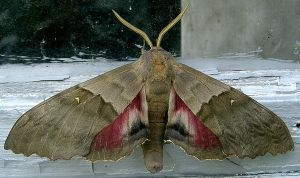 Moth 1 Stock by Penny-Stock