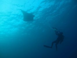 To Swim With the Manta by X5-442