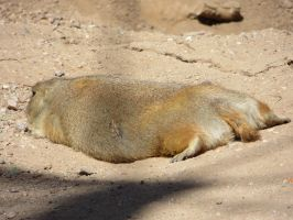Prairie Dog (3) by LeraDraco69