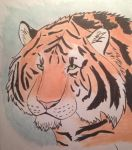 Tiger colors by Gamerwolfgirl