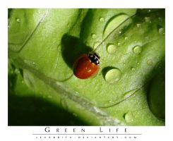 Green Life by leocbrito