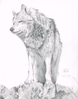 Wolf on rocks by maytimber