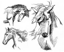 Horse sketches by heather737