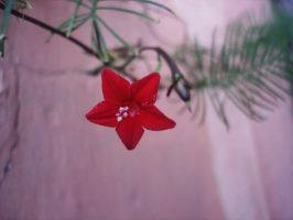 Little Red Star by iDoux