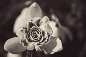 Galanthus inside by Sudlice