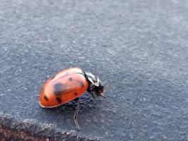 Oh look it's a baby lady bug by Cheedo6