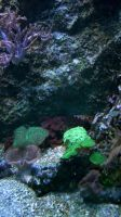 Aquatic Background 20 by ALP-Stock