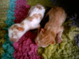 My cat Tiger's kittens. by lerdy88
