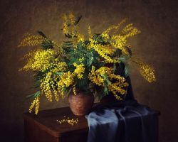 Still life with mimosa by Daykiney