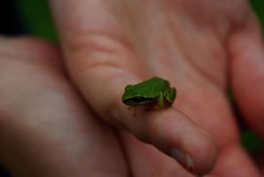 Frog by SomethingWickedStock