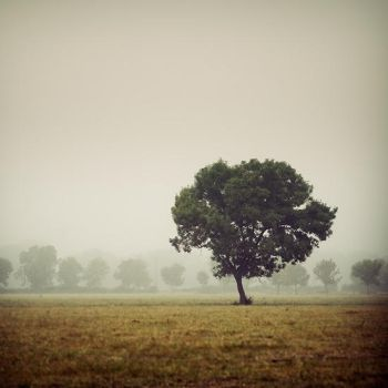 Tree in the morning by julie-rc