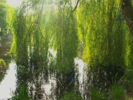 THE WILLOW WEPT by trevj