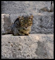 Cat 1 by mikeb79