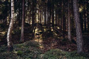 Forest Life VII by Freggoboy