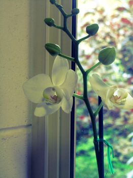 orchid 2 by JamieSketch101