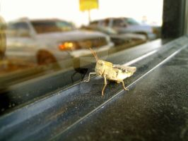 GrassHopper in the Window Seal by cryas