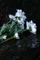 White Reflections by MorningMorning