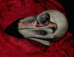 Larger than Life Crow Skull by MorganCrone