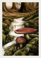 Big Red Mushies.. by garybonner