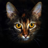 Polly the cat by SublimeBudd