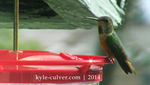 The Hummingbird Stare by kyle-culver