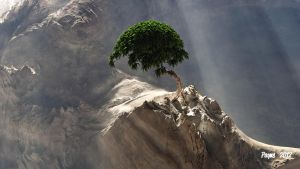 Little Bonsai by Lance66