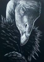 California Condor by Skyelar