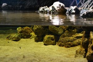 Above and under water by FrankAndCarySTOCK