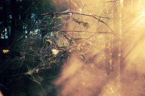webs on tree by Gyyncius