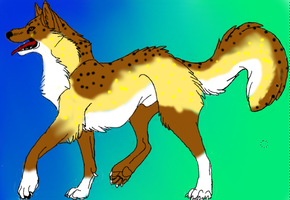 10 point Wolf adoptable by 125cats