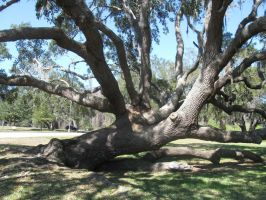 Dave\'s Pics 2 303 Florida Vac 2014 Zacchaeus Tree by crazygardener
