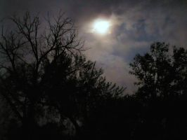 Moonlight through Trees 3 by DarkMaiden-Stock