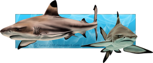 Blacktip Reef Sharks by Nioell