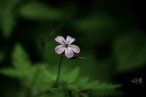 A Flower 1 by eyefish