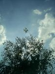 birch and clouds by graphic-rusty