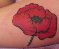 Red Poppy by IAteAllMyPaste